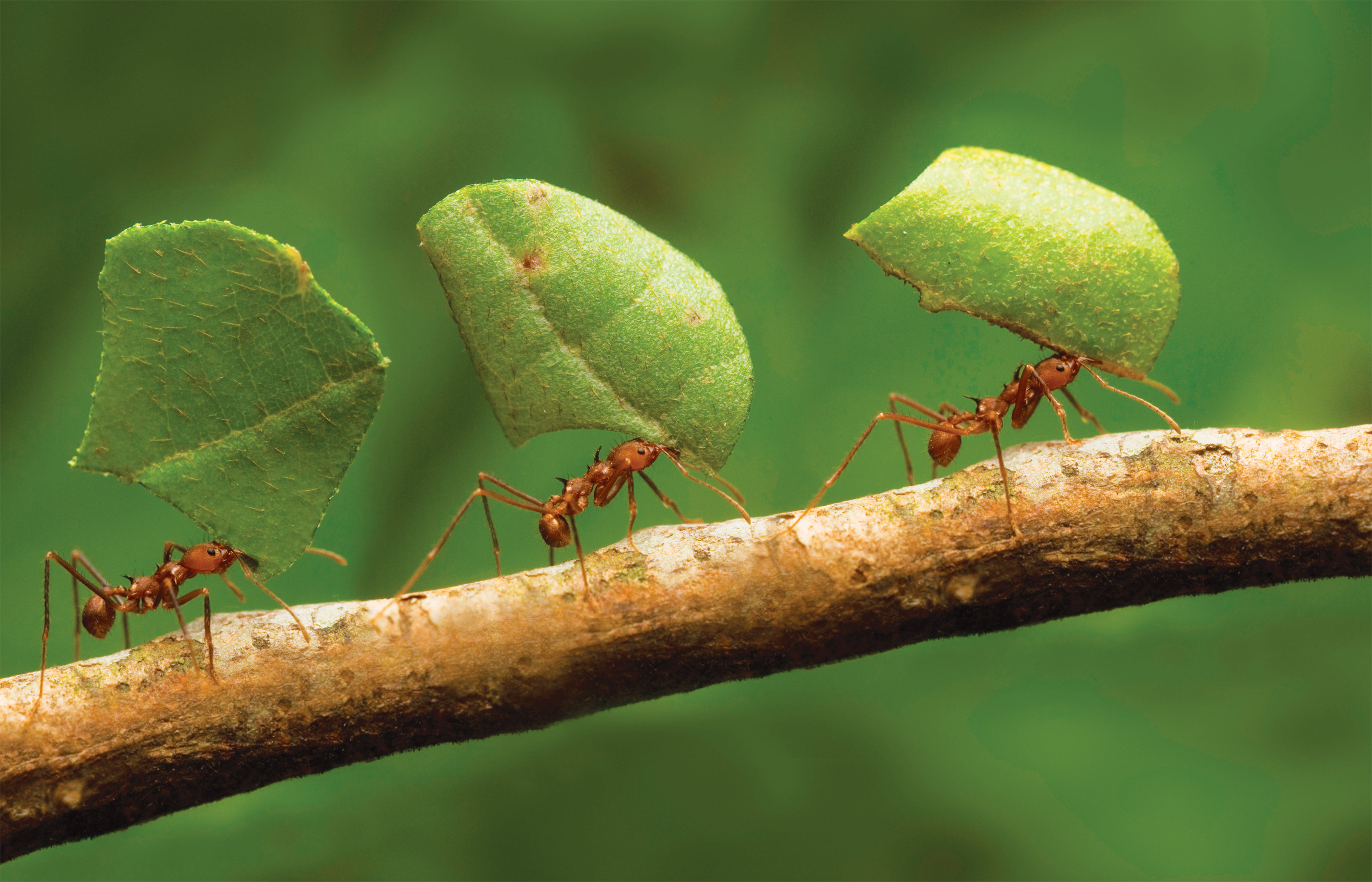 how-ants-reproduce