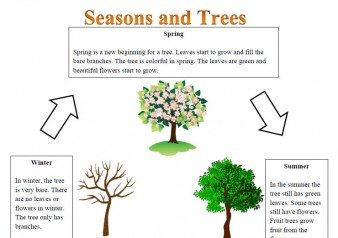 trees-and-seasons-reading-c