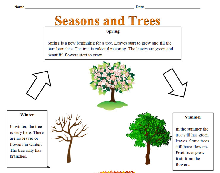 Trees and the Seasons Reading Comprehension