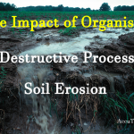 Soil Erosion and the Impact of Organisms Reading Comprehension
